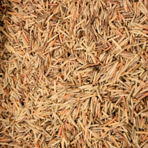 2817-2836-2-hand-harvested-wild-rice-Minnesota-Ojibwe-lake-river