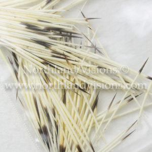 7529-Porky-Porcupine-quill-quills-natural