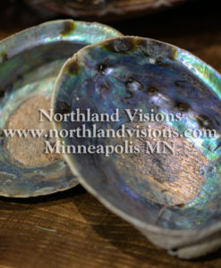 15764-Abalone-Shell-Blue-Green-5-6-inch-Northland-Visions