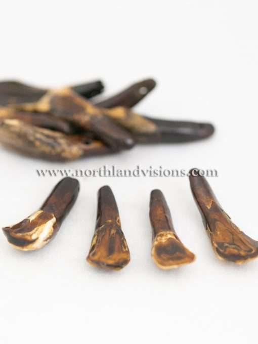 Buffalo Teeth Stained, 10 Pieces