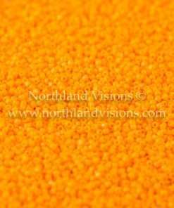 Japanese Seed Bead, TOHO CRS-042D, Opaque Light Orange, 15/0 3-Cut, 14 grams