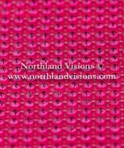 Czech Preciosa Rhinestone Banding, 491-81-301/4A, Fuchsia/Fluorescent Pink, ss13, 1 Row, 1 Yard