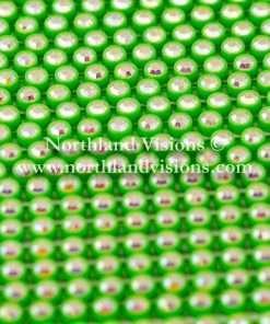 Czech Preciosa Rhinestone Banding, 491-81-301/4K, Crystal AB/Acid Green, ss13, 1 Row, 1 Yard